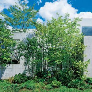 柳沢教授の家