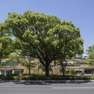 tonarino - 設計: 原田真宏 + 原田麻魚 / MOUNT FUJI ARCHITECTS STUDIO 施工: 木下建設
