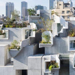 Tree-ness House